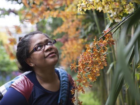 Les orchidées sont à l'honneur au Jardin botanique de Chicago