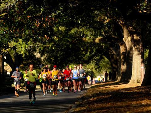 Course à l'ombre des chênes lors du marathon de la Louisiane