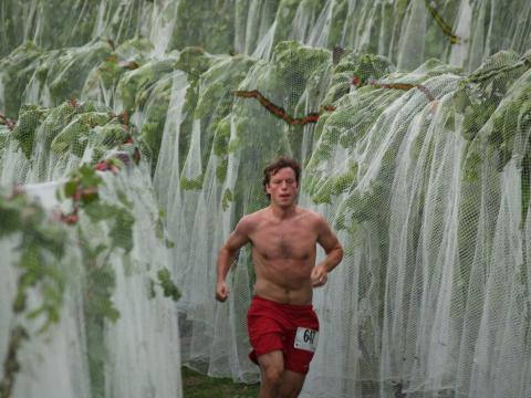 Course à pied à travers les vignes lors du Harvest Stompede