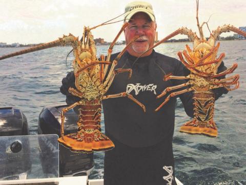 Gros homards pêchés pendant le festival annuel BugFest à Lauderdale-by-the-Sea